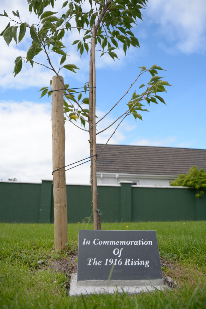 1916 Commemorative Tree