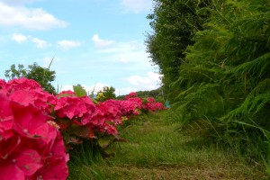 Hydrangea Project entering and exiting the Village